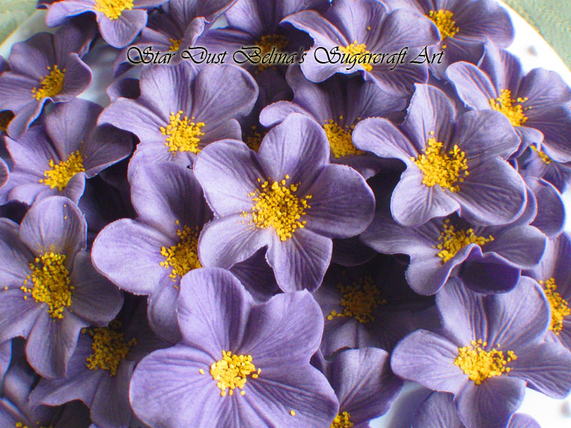Purple Blossoms Flowers