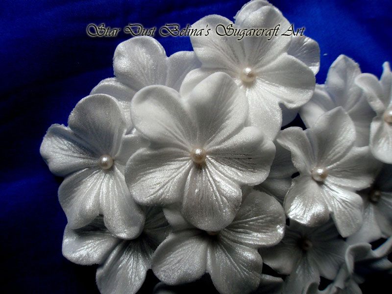 $White pearl blossoms flowers