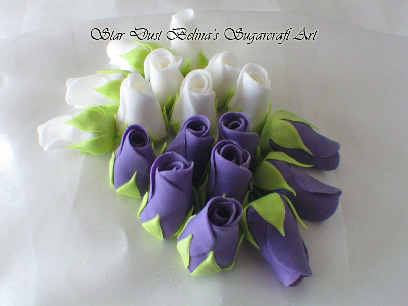 White and violet roses buds  flowers