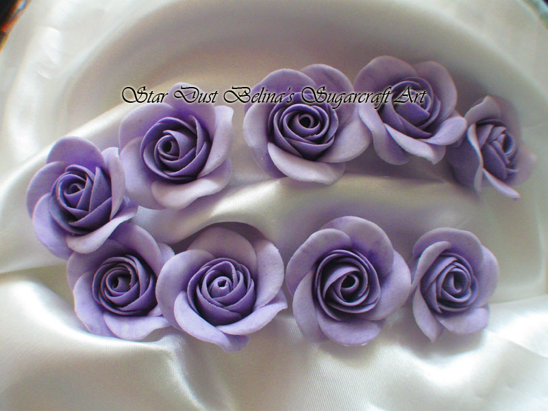 $Purple roses flowers