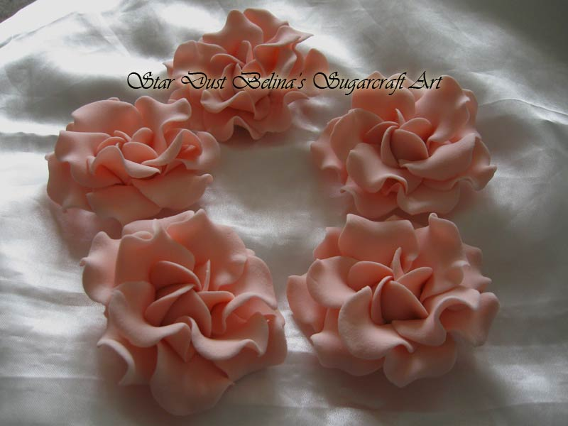 Large Gardenia roses  pinky peach colour