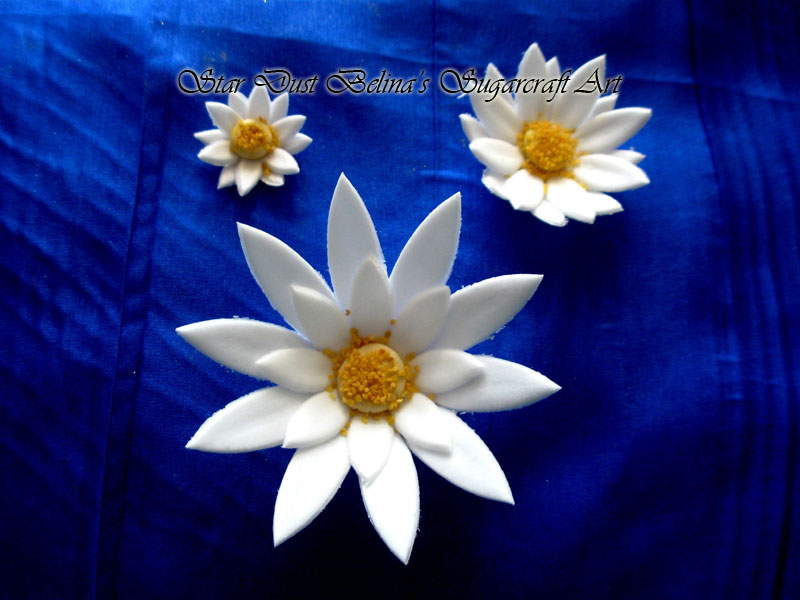 White daisy sugar flowers